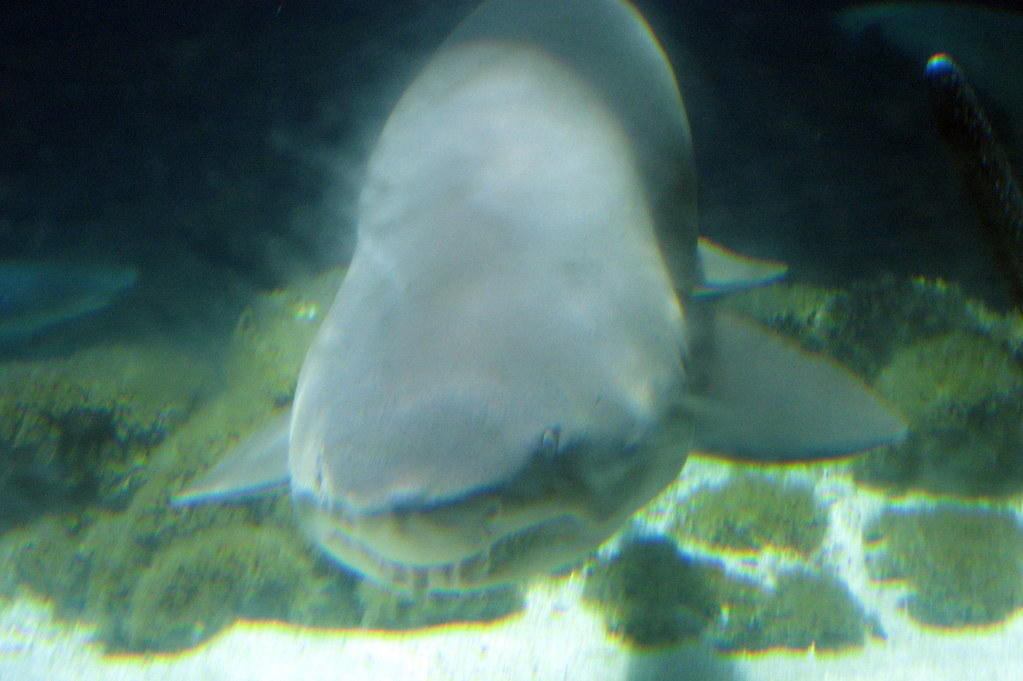 Image Result For Brooklyn Aquarium