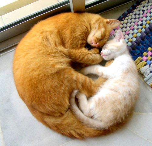 The Cat-Circle of Love | by Gloson