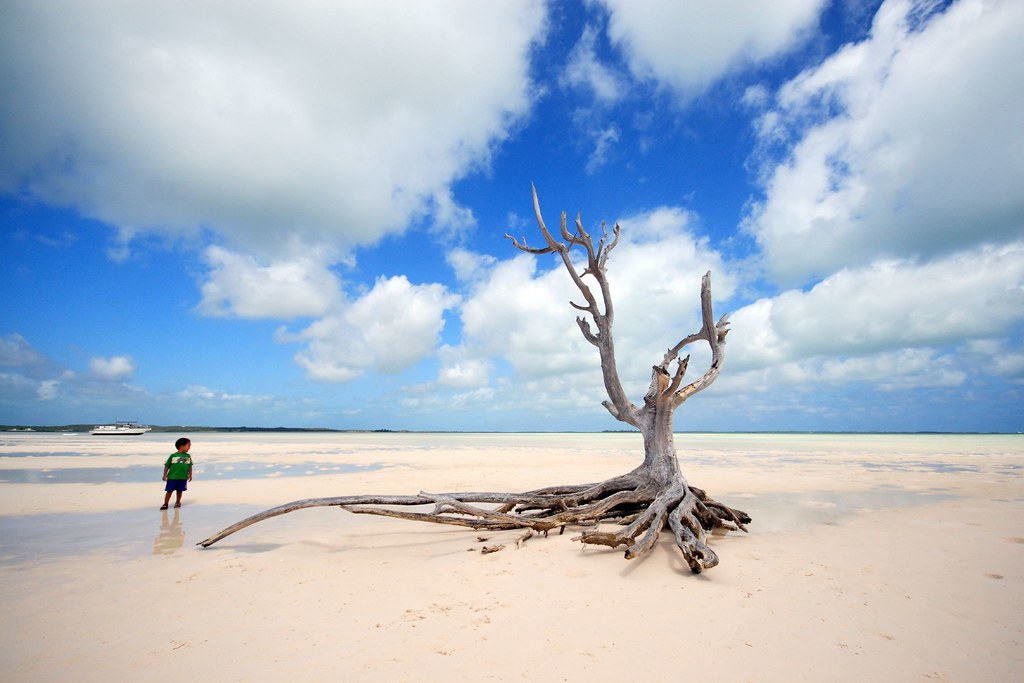 The lone tree at harbour island eleuthera bahamas the for Bahamas pink sand beaches
