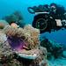 Filming Clownfish