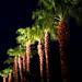 Palm Days