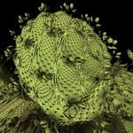 Hybrid Mandelbulb Fractals Gallery