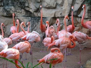 Flamingo Gathering | by The Brit_2