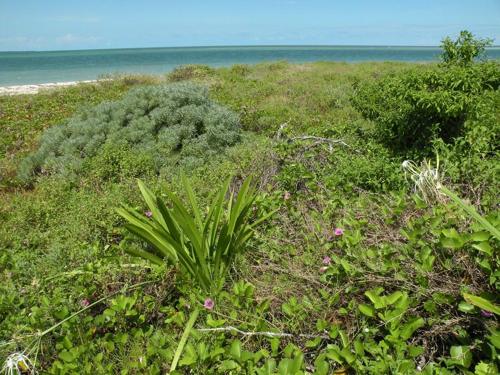 Key West Nwr And Native Plants Native Plants Grow On An