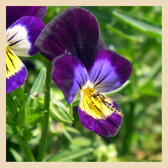 Plantas para el hogar blog de jardiner a y decoraci n - Plantas exterior todo el ano ...