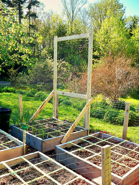 Pea Trellis Square Foot Garden Flickr Photo Sharing