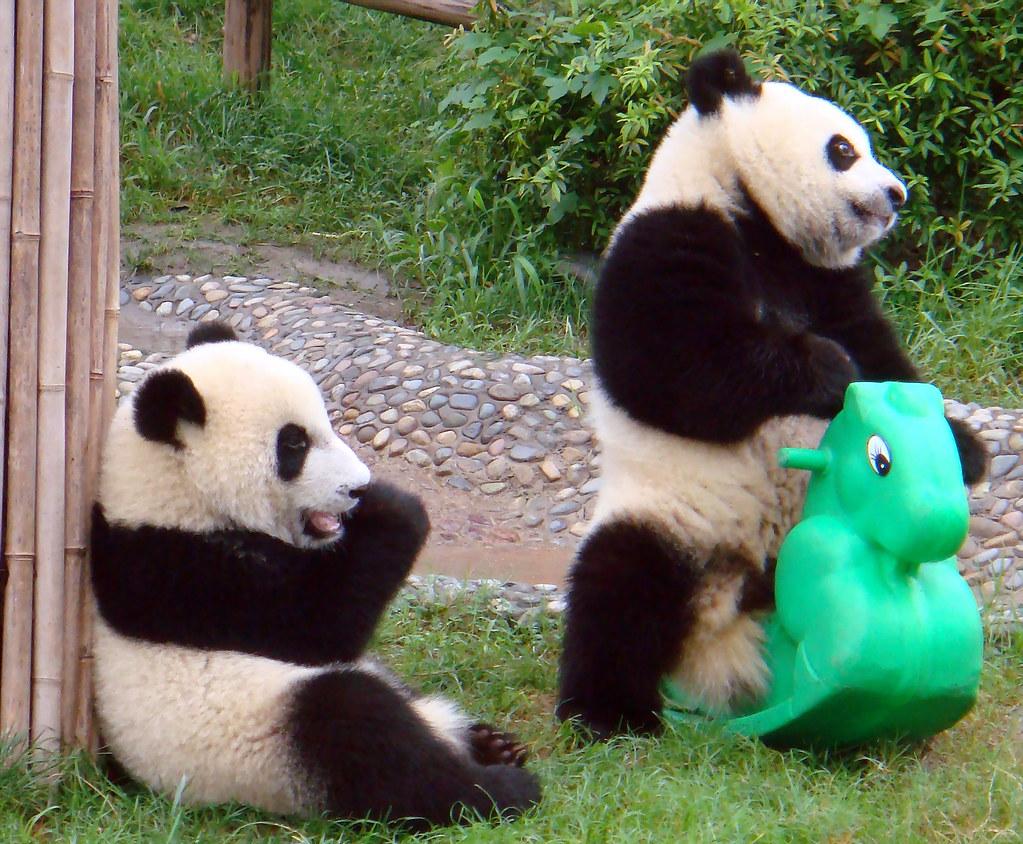 happy panda | wolong by mary | anita | Flickr