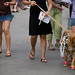 Dog_Parade_9