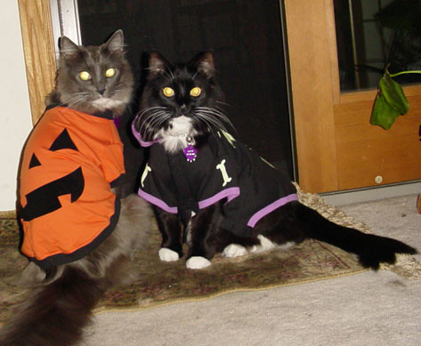 Just wrong.......... kittie costumes | by ericrush