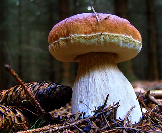 King Bolete | by Batram