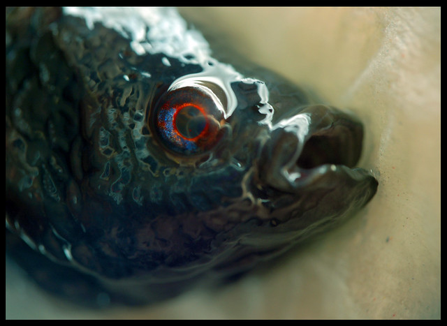 Fish head flickr photo sharing for Fish head app