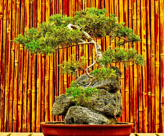 The japanese garden donald c tillman water reclamation for Japanese water garden plants