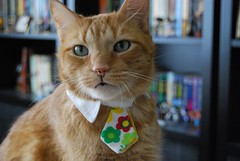 """Secretary, take a memo:  Cat hates tie."" 