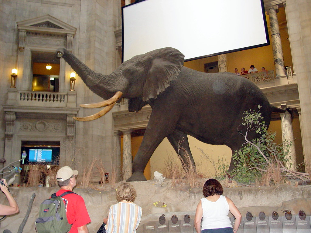 Museum Of Natural History In Washingto
