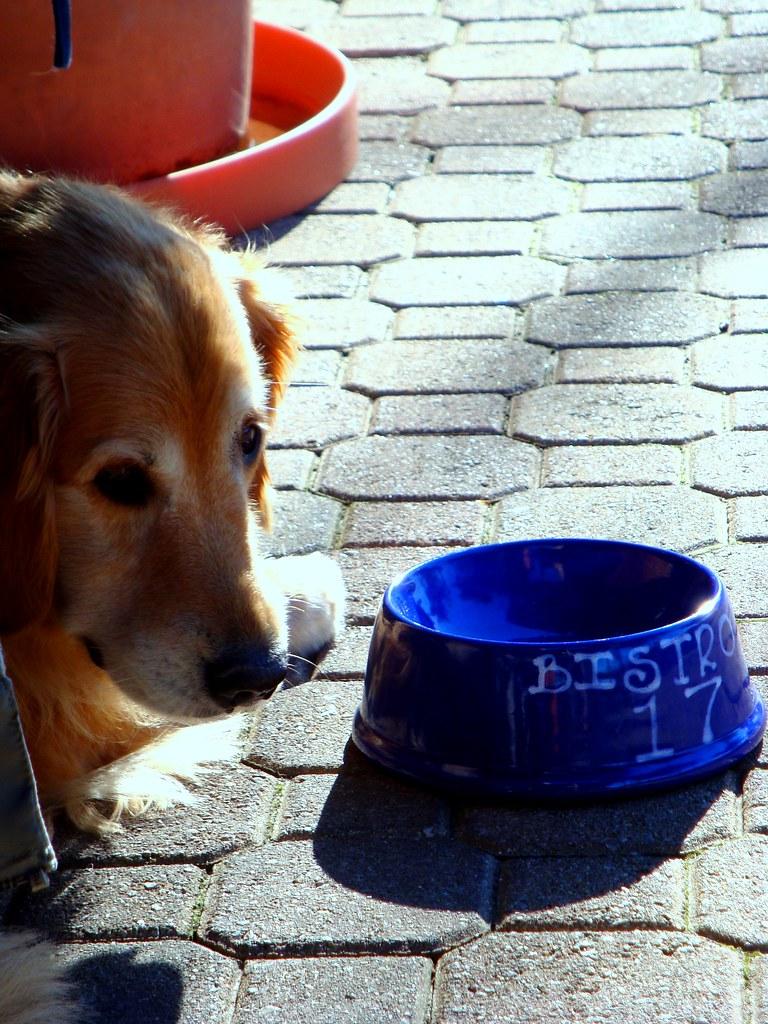 Dog Friendly Restaurant Santa Maria