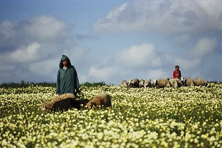 Shepherd in rural Morocco | by World Bank Photo Collection