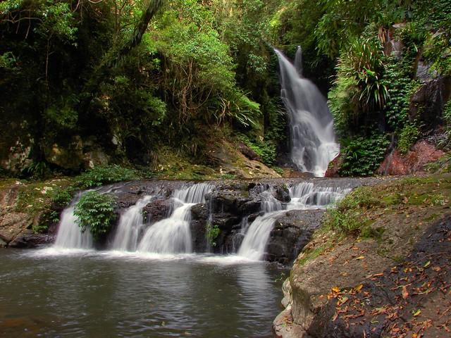 Elabana falls australian rainforest flickr photo sharing for Australian rainforest