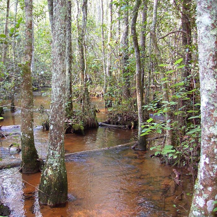 Coastal plain stream georgia u s fish and wildlife for Georgia fish and wildlife