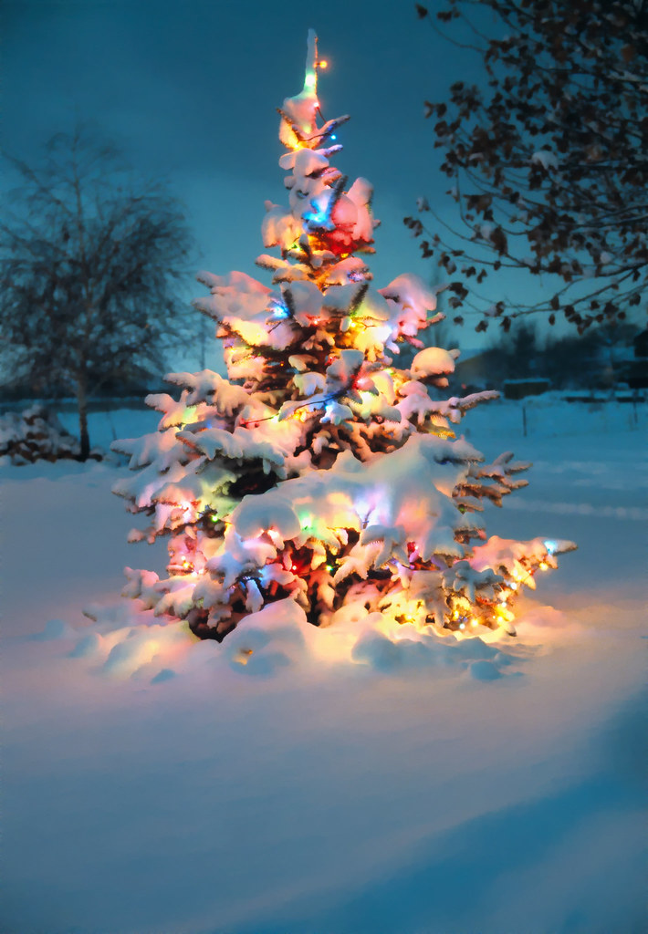 snow covered christmas tree with colorful lights re posted flickr - Snow Christmas Tree