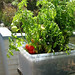 OBSOLETE METHOD  » Sub-irrigation Storage Box Planter