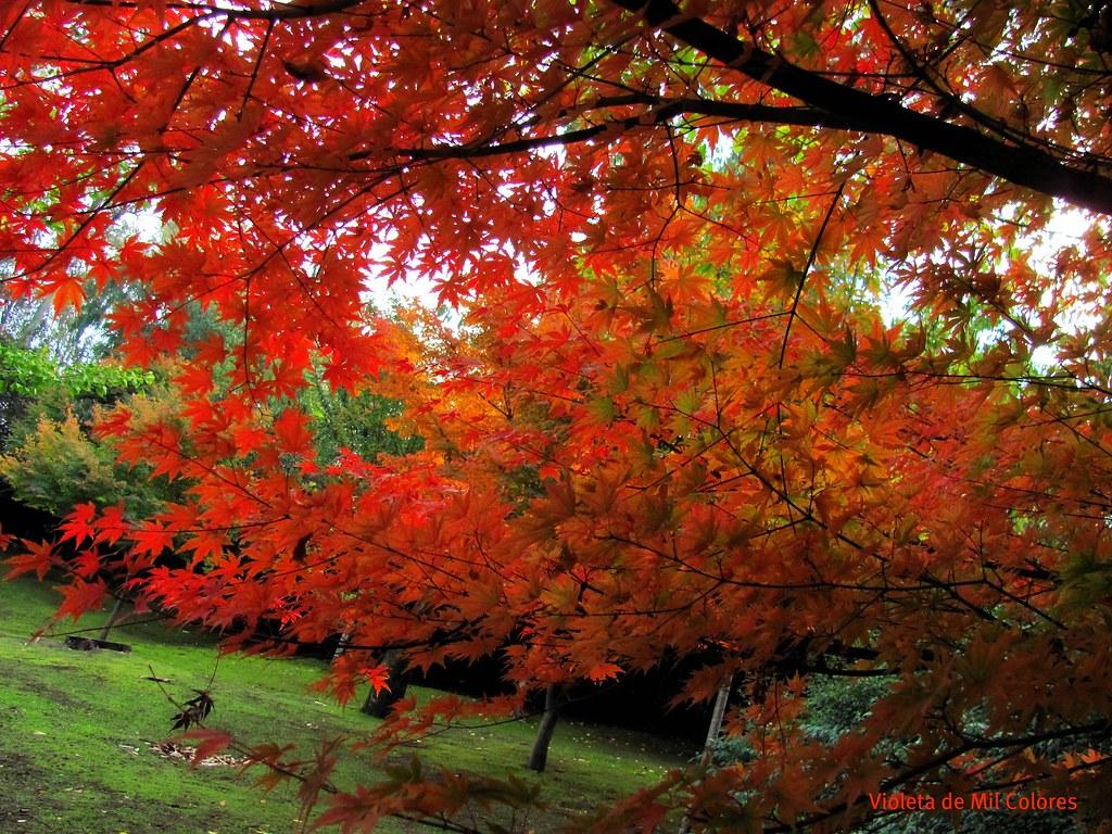 Oto o en santiago de chile cerro san cristobal jard n for Jardin japones de santiago