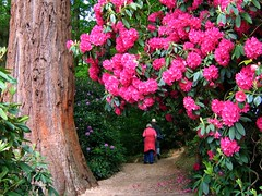 A May Afternoon Walk at Sheffield Park | by UGArdener