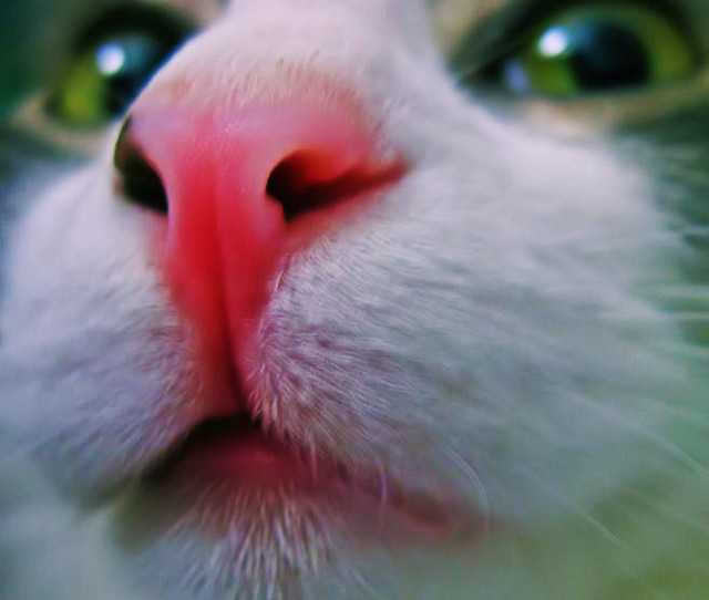 Pink Cat Nose | Pink Cat Nose | lookie.lew | Flickr