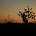 Beach plant at twilight