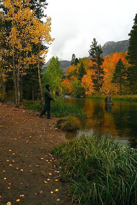 Fall fishing on bishop creek from oct 3 2010 below lake for Bishop creek fishing