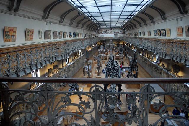 Museum of anatomy paris
