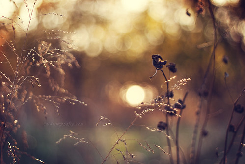 Bokeh Wednesday: Light inside us all | by tumbleweed.in.eden