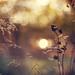 Bokeh Wednesday: Light inside us all