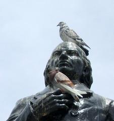 Pigeons on Hidelgo