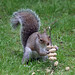 Cyril the squirrel up for a challenge 15:56:36
