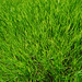 I see grass of green