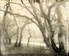trees & road by lawatt