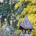 Birdhouse with sassafras in the Discovery Garden