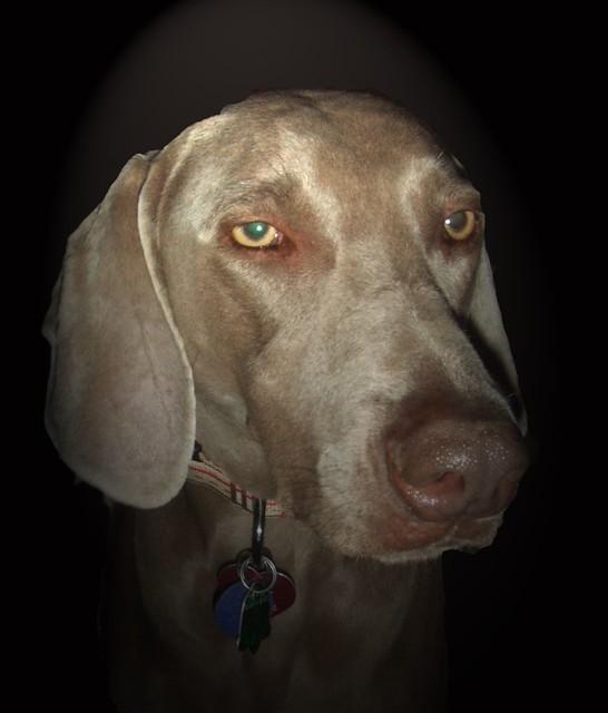 Image Result For Dog Training Windsor