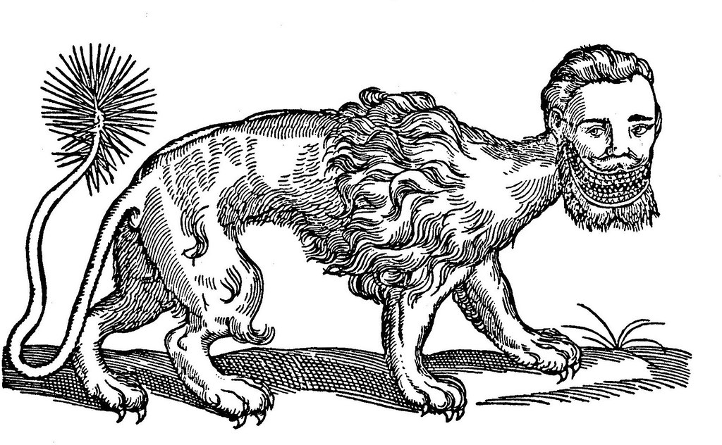 Manticore After Topsell 1607 Woodcut From Edward Topsell