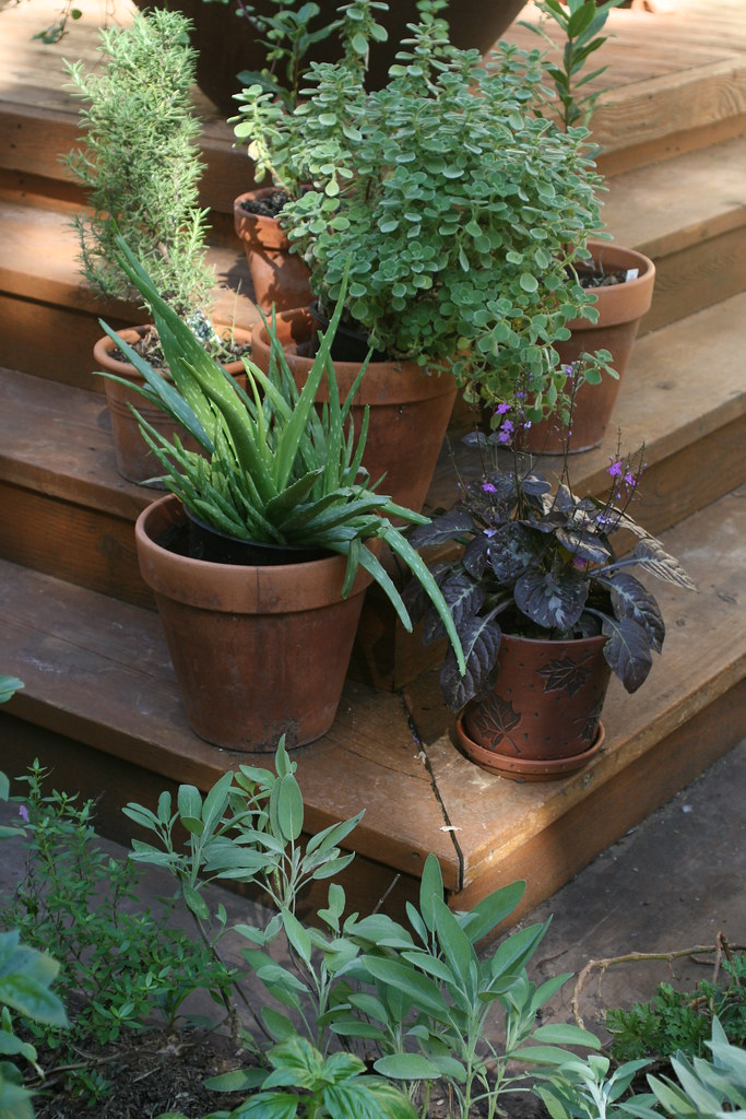 Herbs In Kitchen Ideas Mason Jar