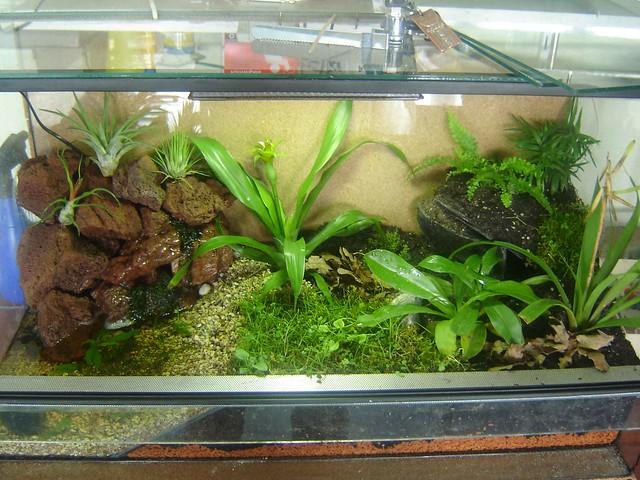 Акватеррариум для амфибий земноводных, фото фотография