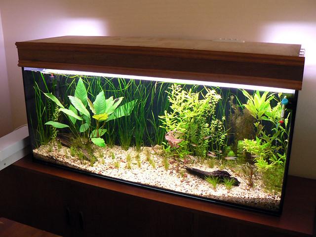 Unpainted diy aquarium hood for Fish tank hood