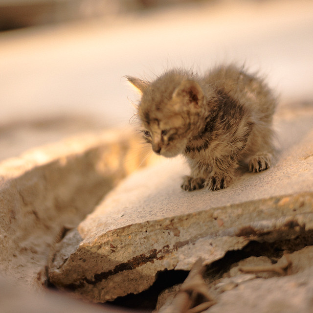 Sad Stray Animals Sad stray little kitty :o( Sad Animal Face