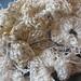 Samples - Coral -  10_3.jpg