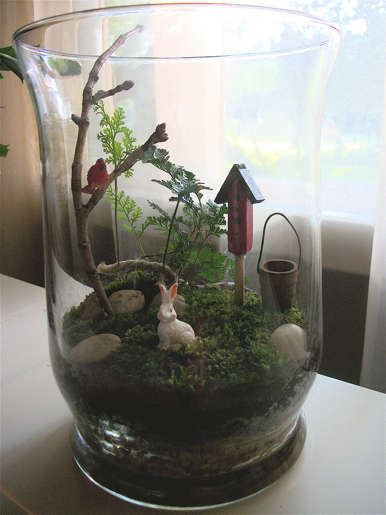 mini glass garden rabbit 39 s foot fern with moss and acces janeizzy flickr. Black Bedroom Furniture Sets. Home Design Ideas