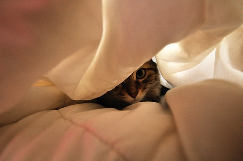 Chat caché - Hidden cat | by VdlMrc