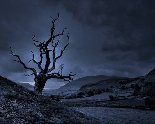 Lightning Tree Steve Bailey Flickr