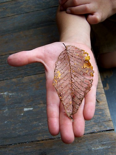Skeleton Leaf | by notes from the trenches