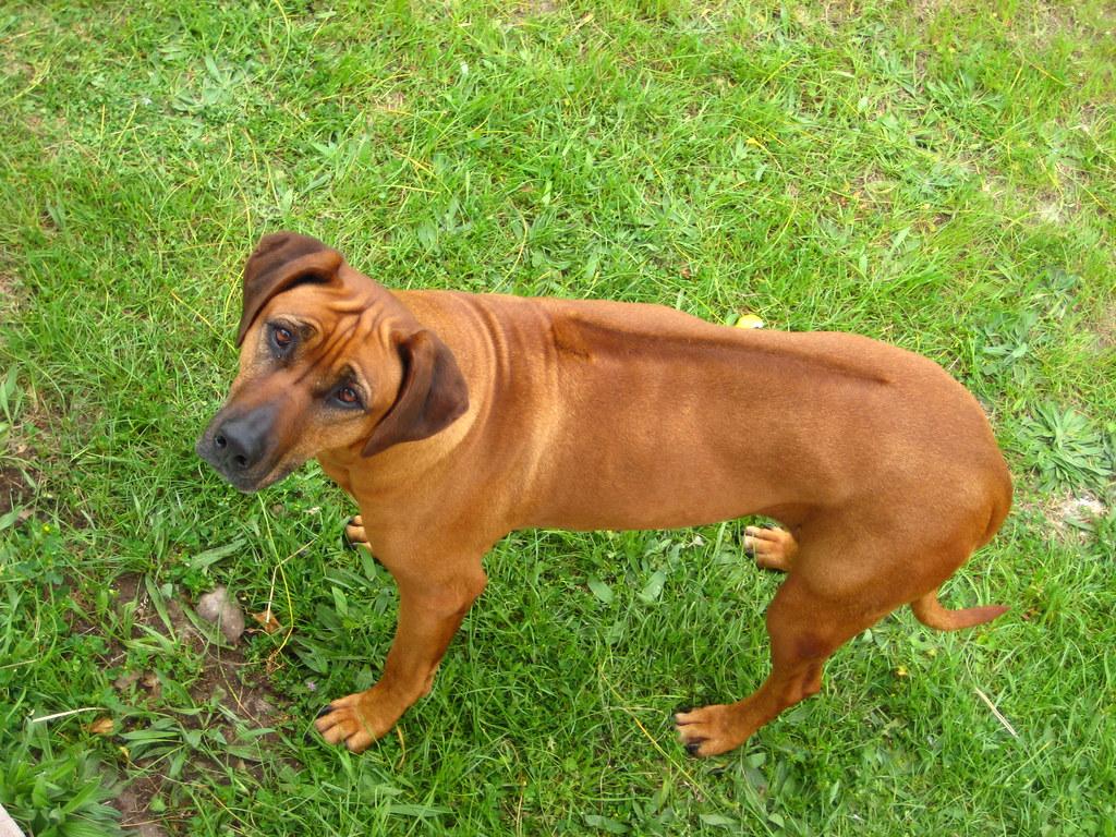 Casa Dog Rescue