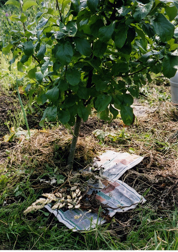 Mulching Wet Newspaper and Cut Weeds | by London Permaculture
